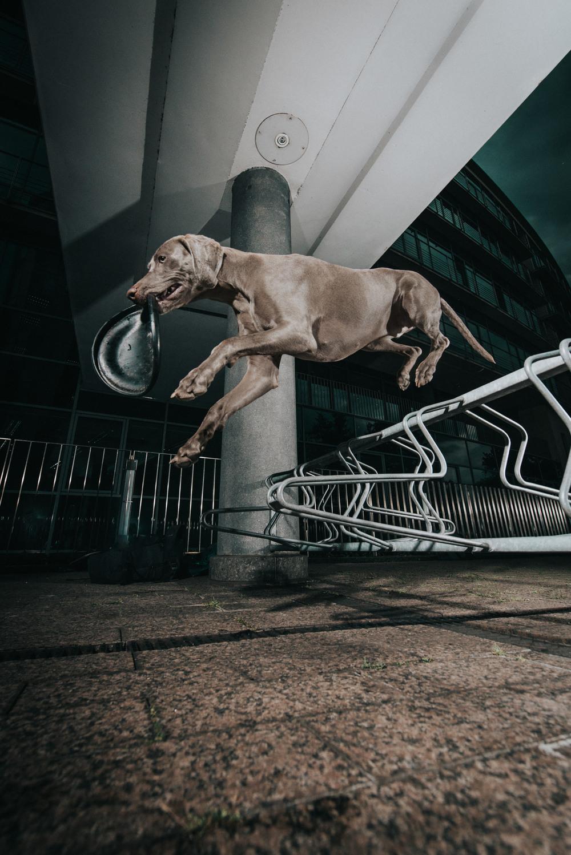 outdoor-dogs-klausdyba-1.jpg