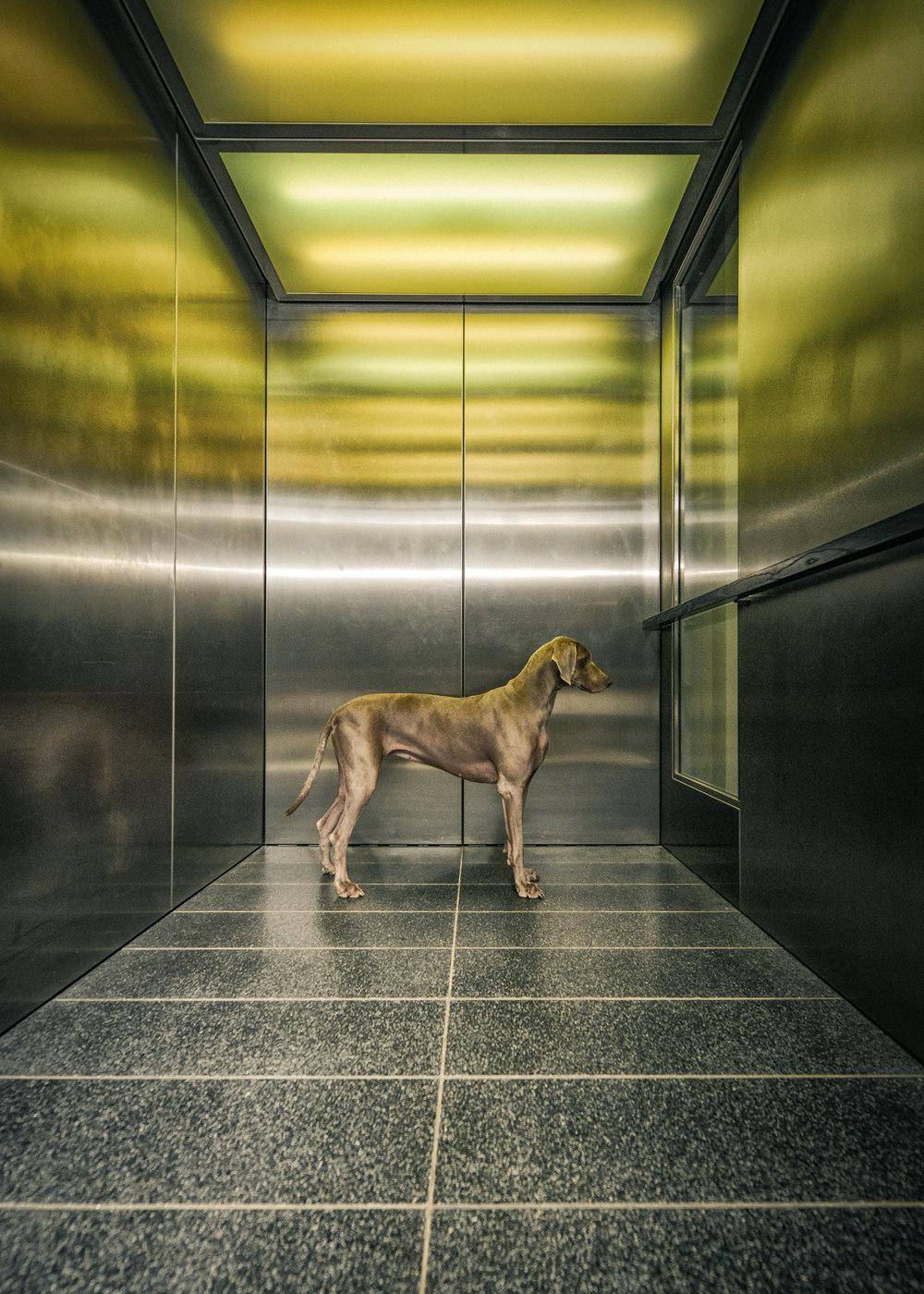 outdoor-dogs-klausdyba-5.jpg