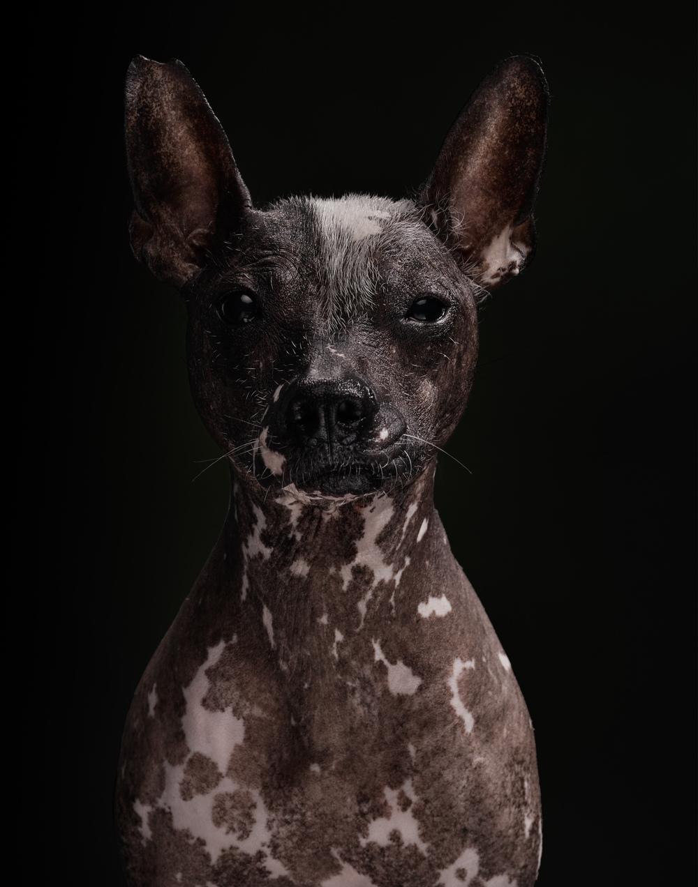 naked-dogs-klausdyba-24.jpg