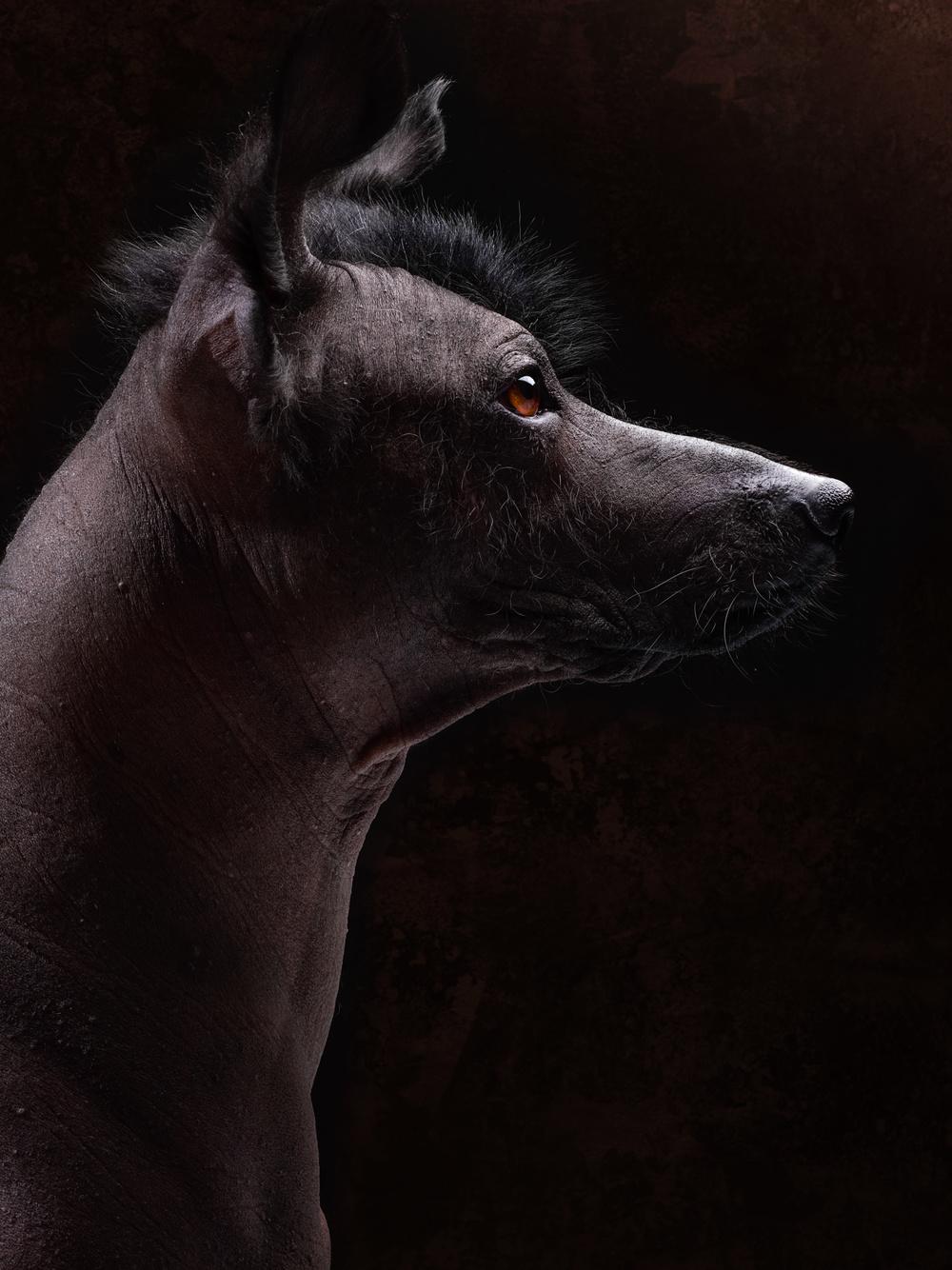 naked-dogs-klausdyba-29.jpg