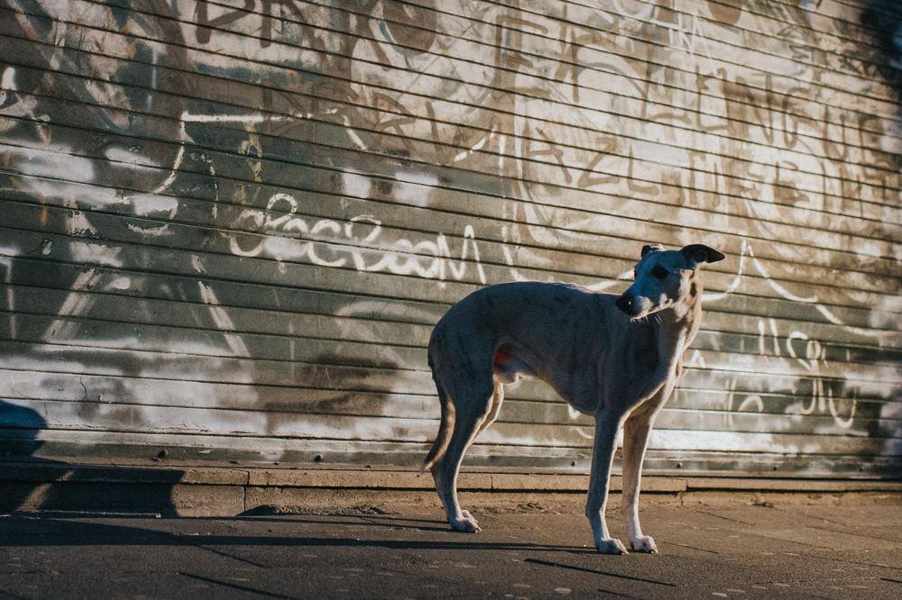 outdoor-dogs-klausdyba-17.jpg