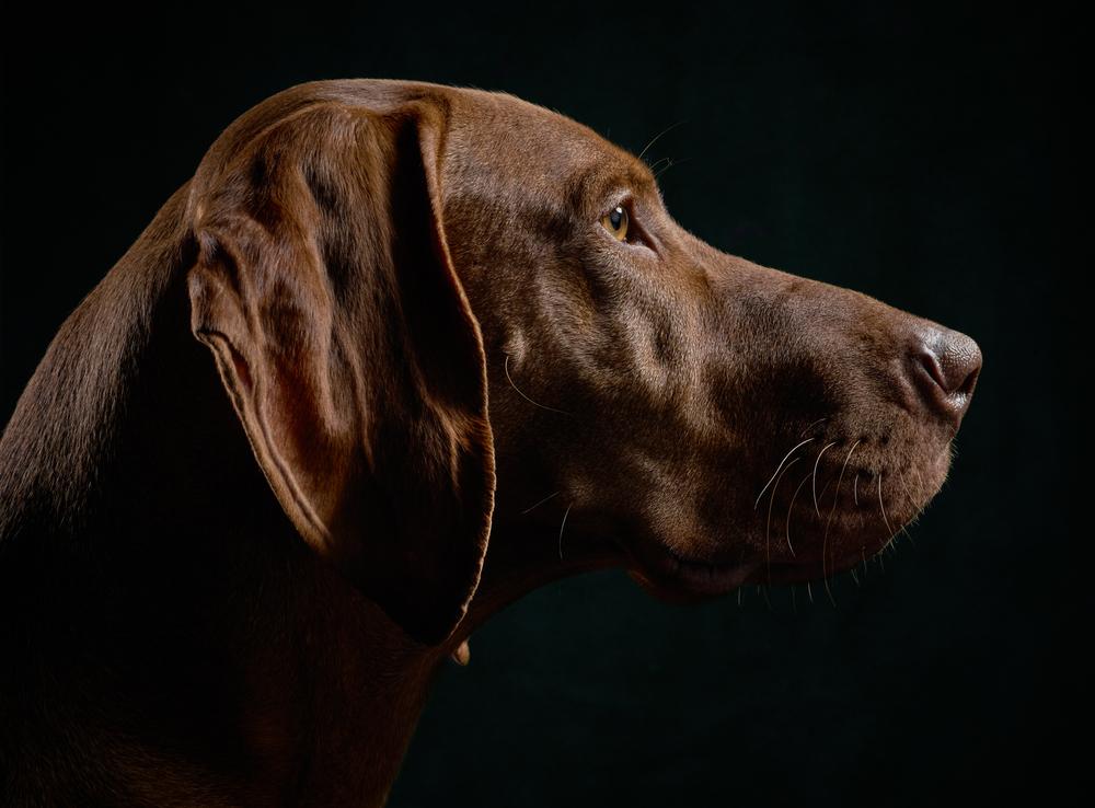 dog-studio@klausdyba-3-2.jpg