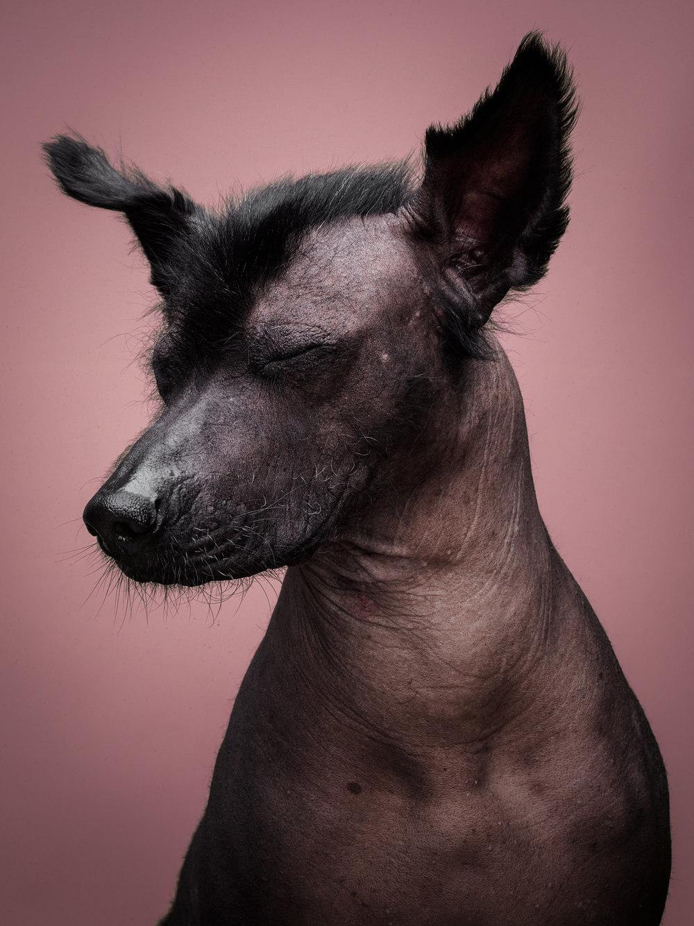 naked-dogs-klausdyba-32.jpg