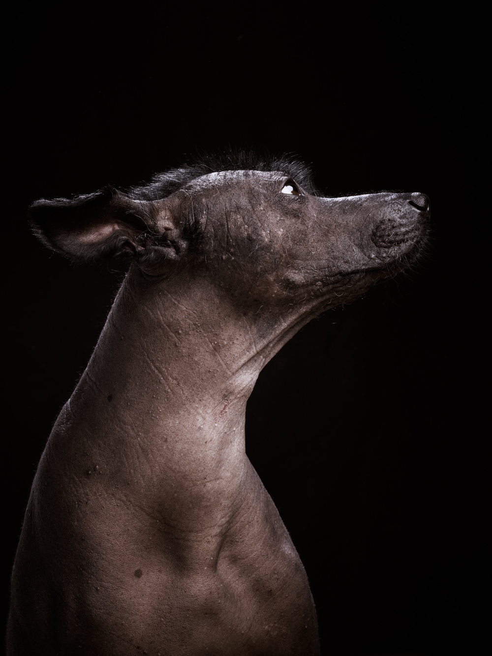 naked-dogs-klausdyba-26.jpg
