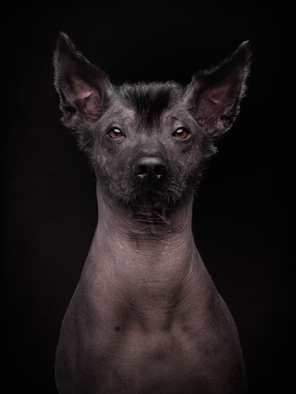 naked-dogs-klausdyba-28.jpg