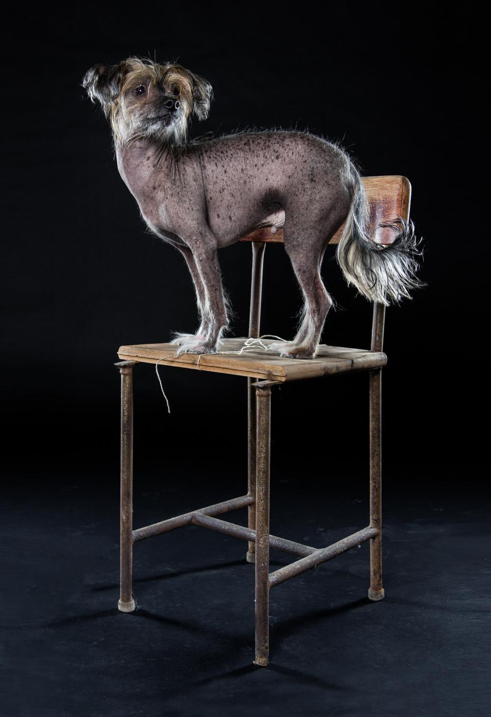 naked-dogs-klausdyba-2.jpg