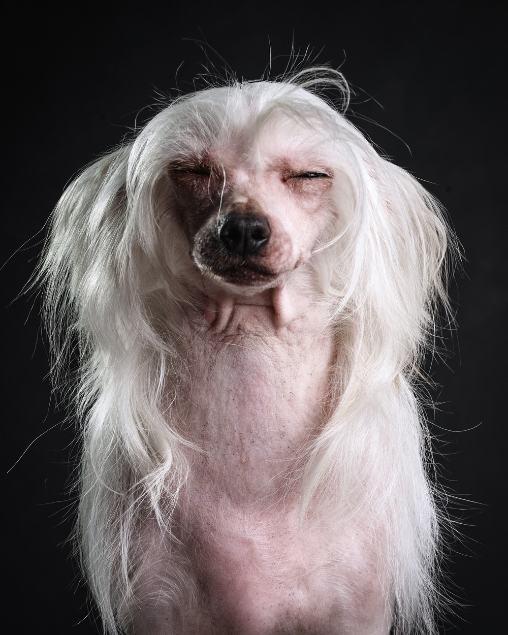 naked-dogs-klausdyba-25.jpg