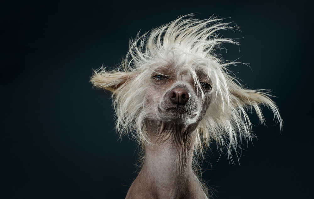 naked-dogs-klausdyba-13.jpg