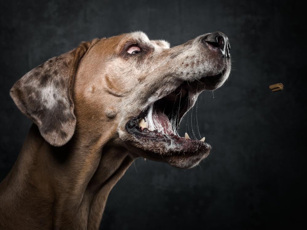 treats-dogs-klausdyba-5.jpg