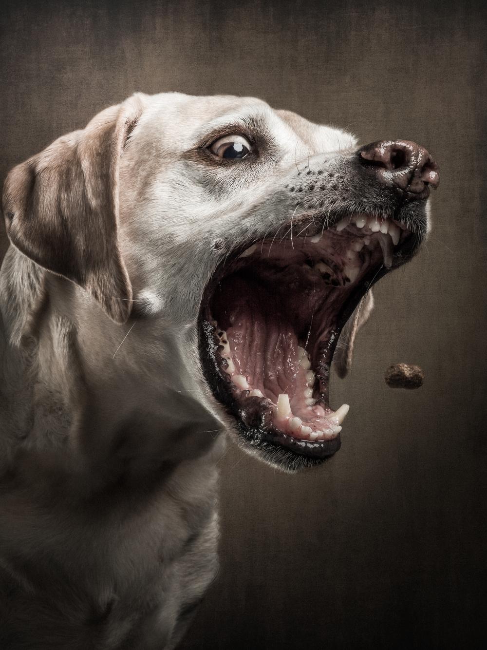 treats-dogs-klausdyba-7.jpg