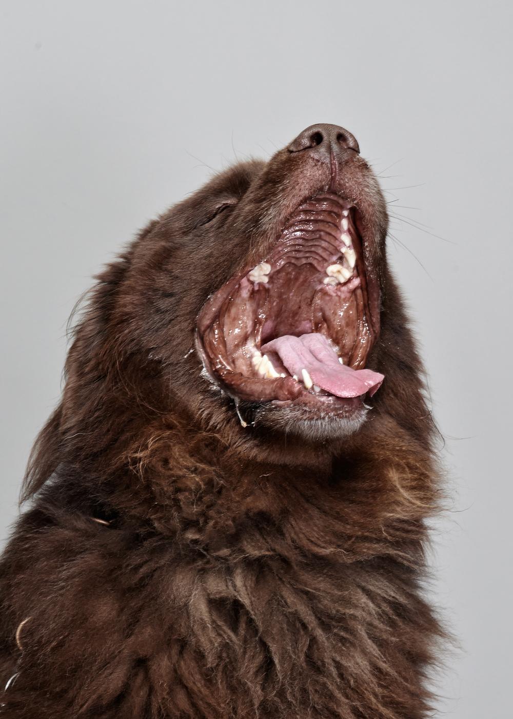 treats-dogs-klausdyba-1.jpg