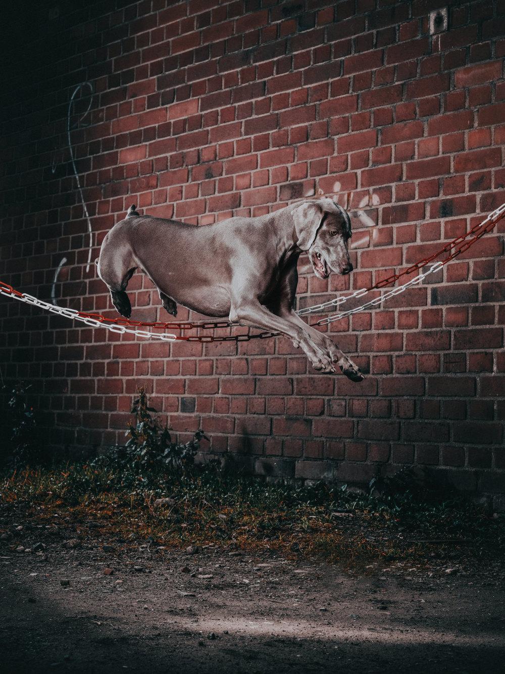 outdoor-dogs-klausdyba-10.jpg