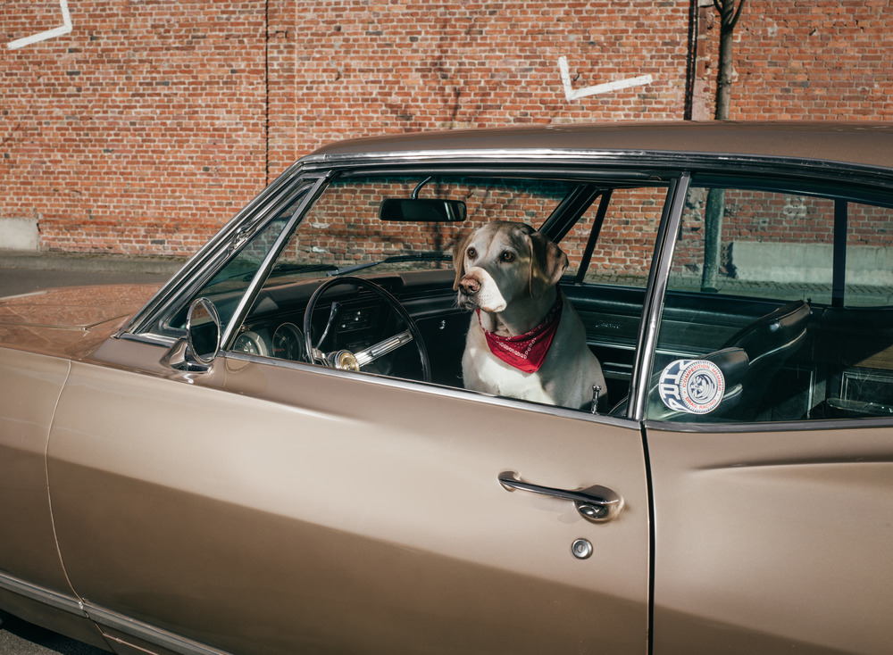 outdoor-dogs-klausdyba-18.jpg