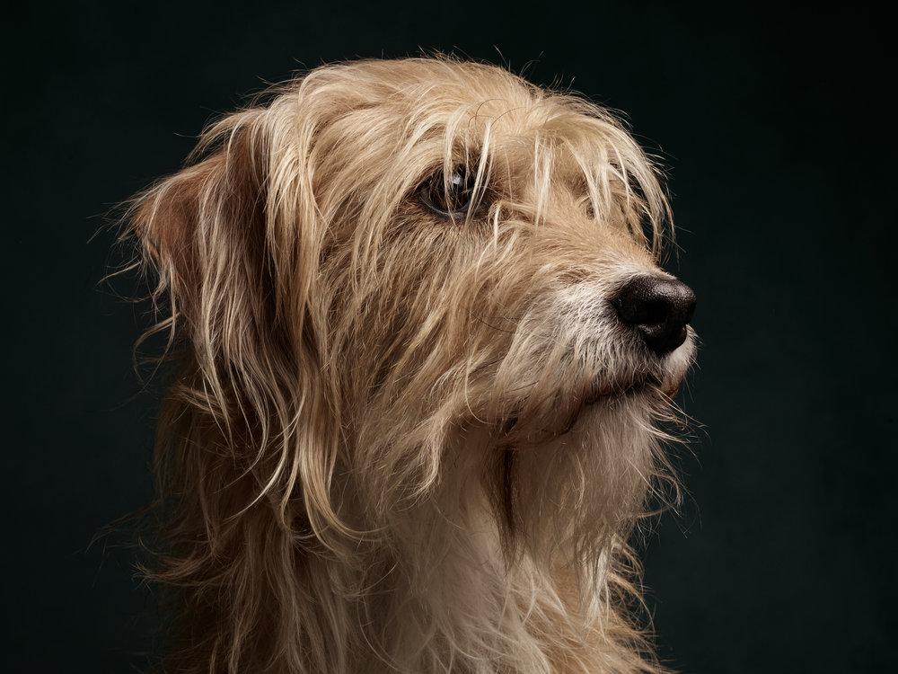 #TDP-Klaus-Dog23420 1.jpg