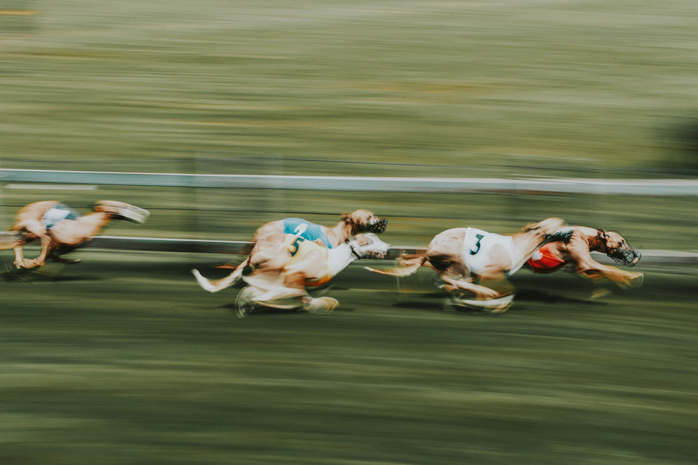 DOG RACE COLOGNE