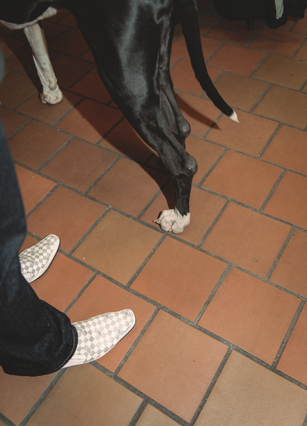 klaus dyba dog show-7.jpg