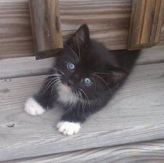 cat+dc.jpg