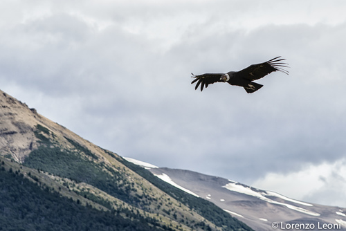 golden eagle fishing patagonia lorenzo leoni