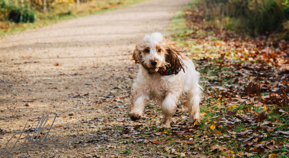 Hollisterphotography ABBY CLOWES WOOD DOG WALK-18.JPG