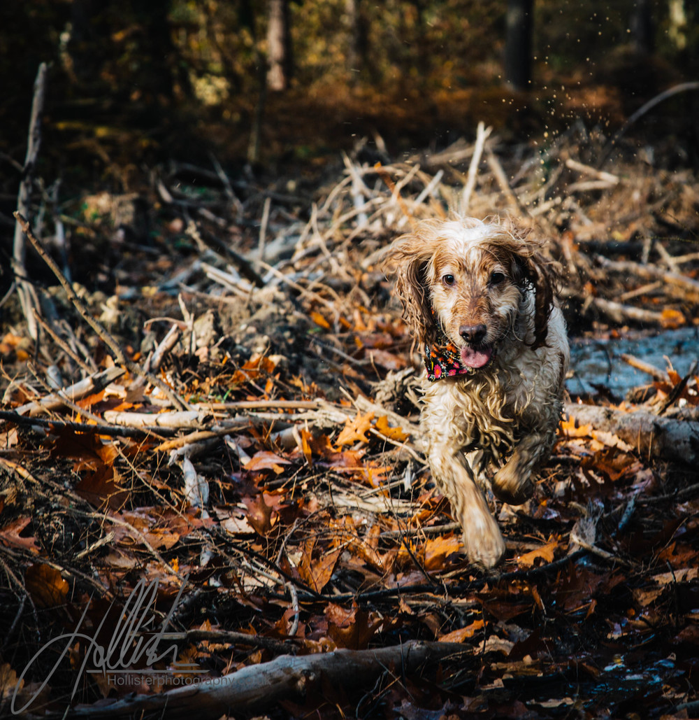 Hollisterphotography ABBY CLOWES WOOD DOG WALK-25.JPG