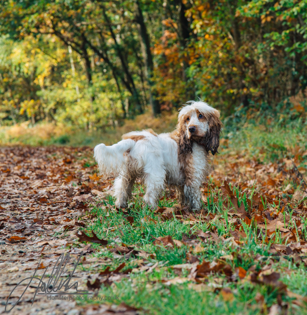 Hollisterphotography ABBY CLOWES WOOD DOG WALK-27.JPG