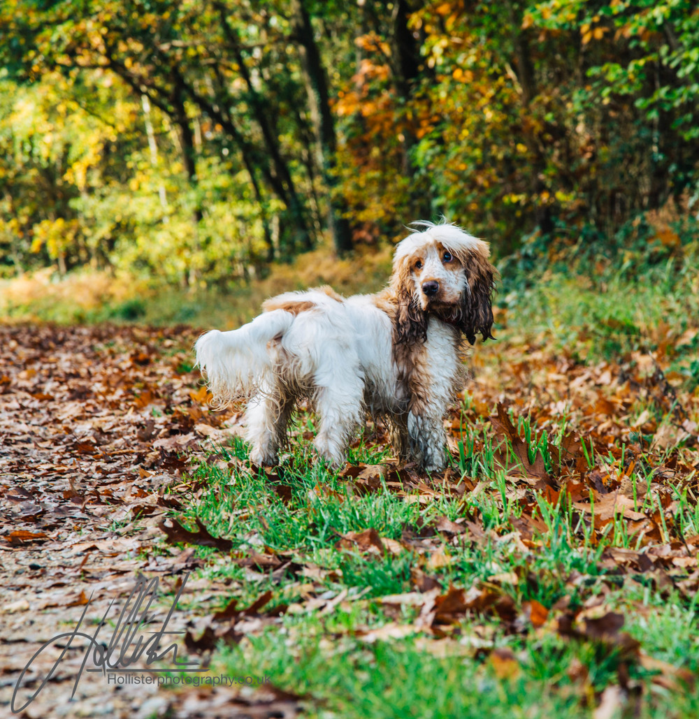 Hollisterphotography ABBY CLOWES WOOD DOG WALK-26.JPG