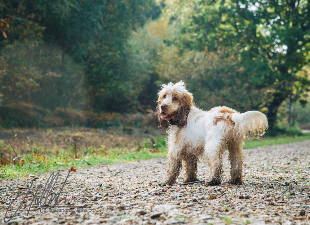 Hollisterphotography ABBY CLOWES WOOD DOG WALK-28.JPG