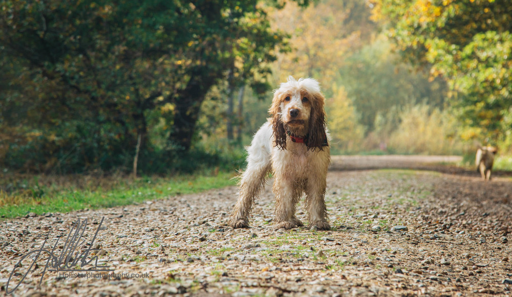 Hollisterphotography ABBY CLOWES WOOD DOG WALK-30.JPG