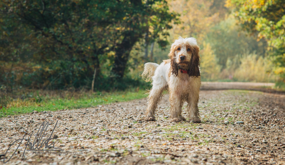 Hollisterphotography ABBY CLOWES WOOD DOG WALK-32.JPG