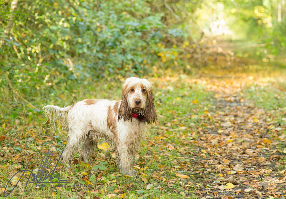 Hollisterphotography ABBY CLOWES WOOD DOG WALK-38.JPG