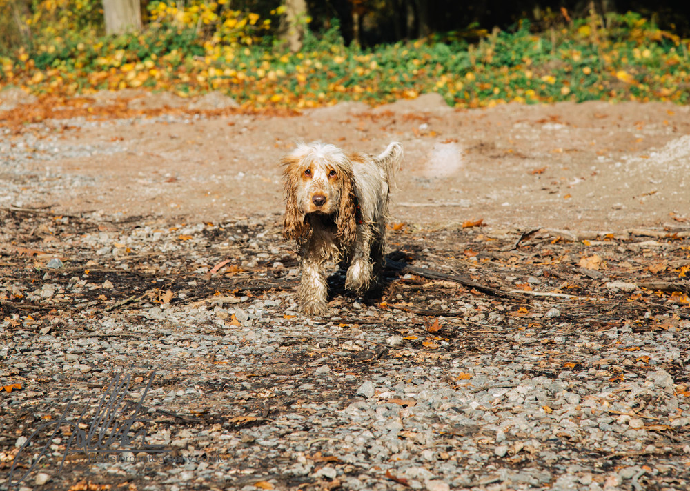 Hollisterphotography ABBY CLOWES WOOD DOG WALK-42.JPG
