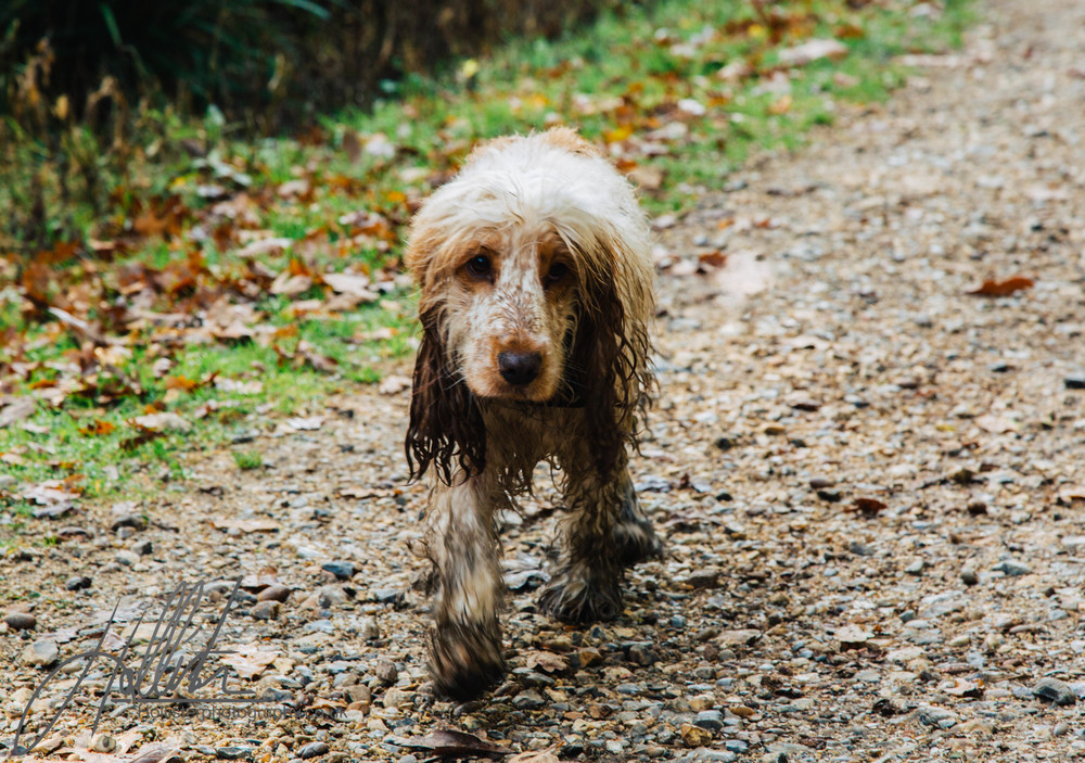 Hollisterphotography ABBY CLOWES WOOD DOG WALK-44.JPG