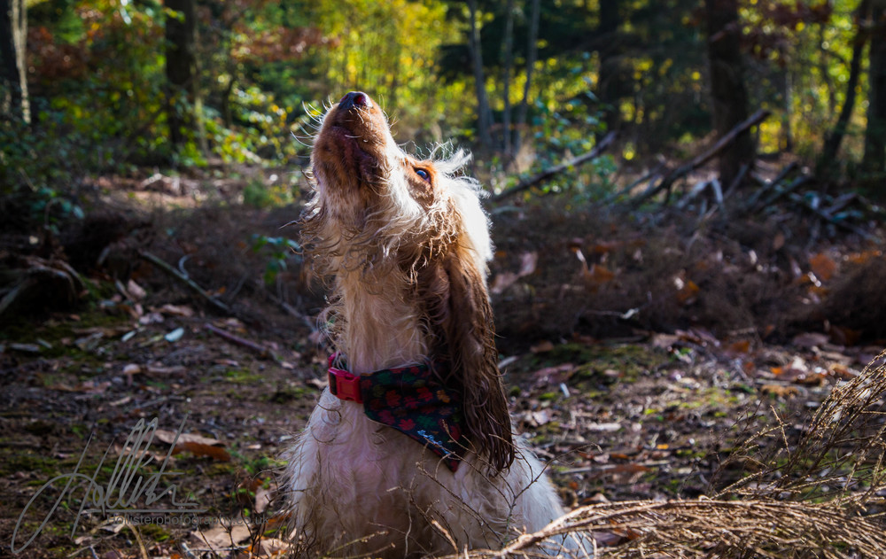 Hollisterphotography ABBY CLOWES WOOD DOG WALK-47.JPG