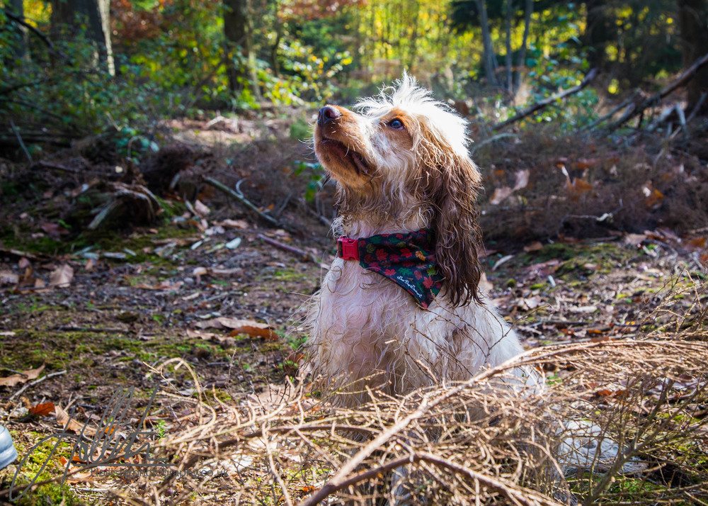 Hollisterphotography ABBY CLOWES WOOD DOG WALK-49.JPG