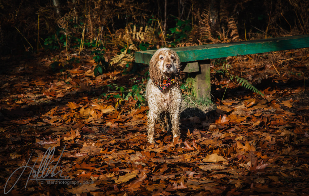 Hollisterphotography ABBY CLOWES WOOD DOG WALK-70.JPG