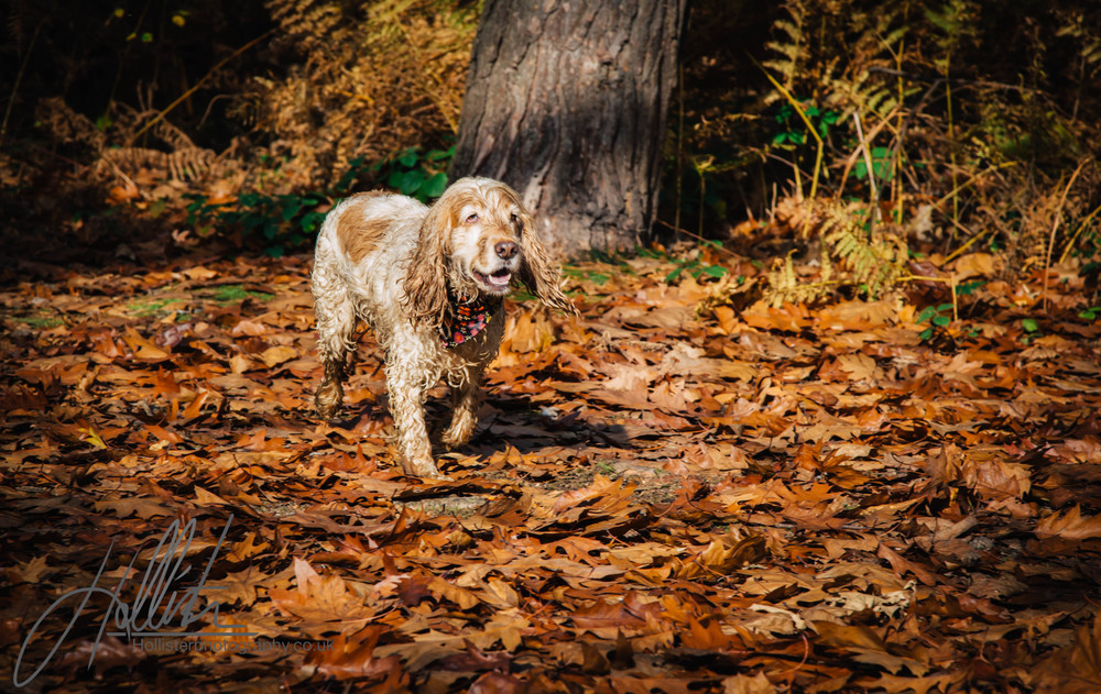 Hollisterphotography ABBY CLOWES WOOD DOG WALK-74.JPG