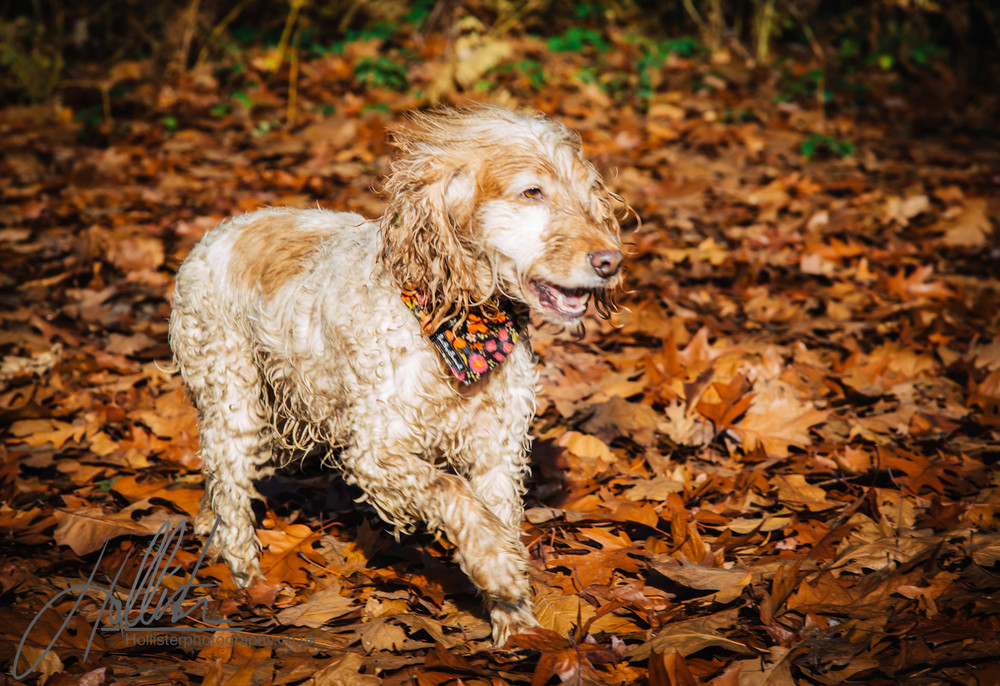 Hollisterphotography ABBY CLOWES WOOD DOG WALK-75.JPG