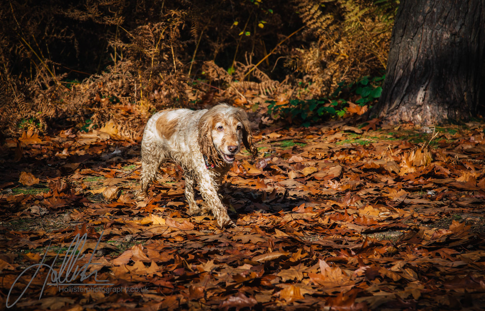 Hollisterphotography ABBY CLOWES WOOD DOG WALK-76.JPG