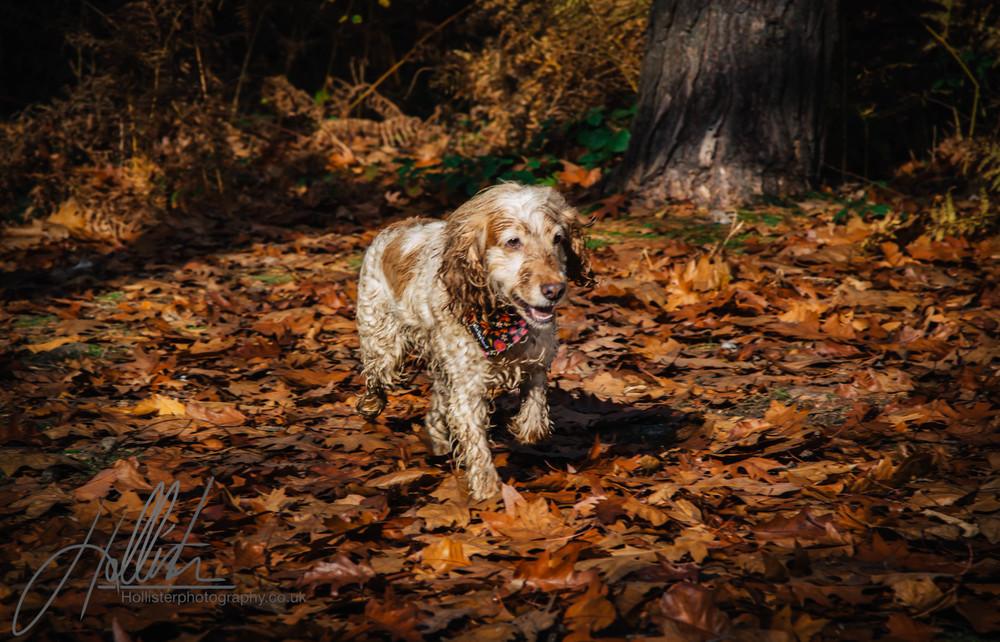 Hollisterphotography ABBY CLOWES WOOD DOG WALK-77.JPG