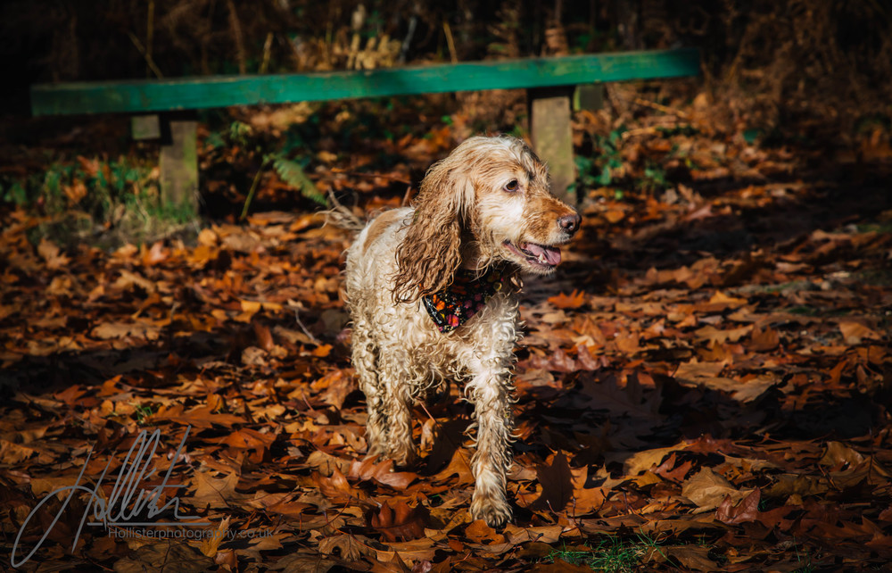 Hollisterphotography ABBY CLOWES WOOD DOG WALK-78.JPG
