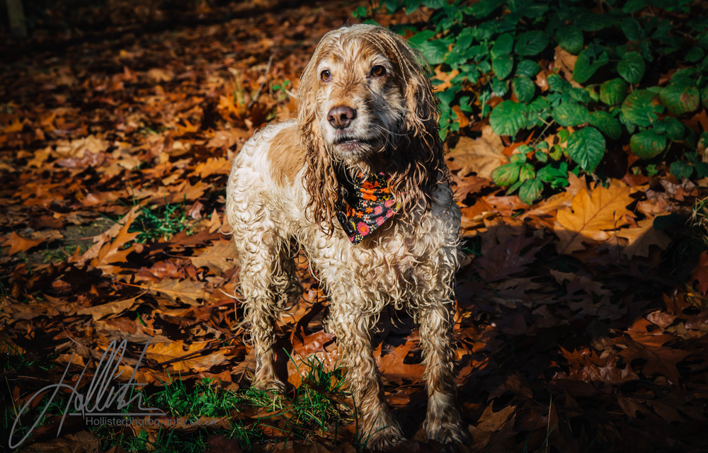 Hollisterphotography ABBY CLOWES WOOD DOG WALK-80.JPG