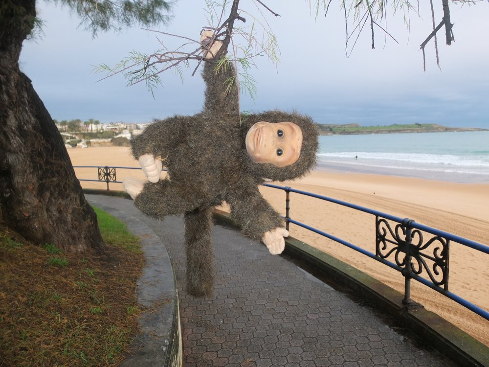 Charlie swinging through the trees on Santander beach....