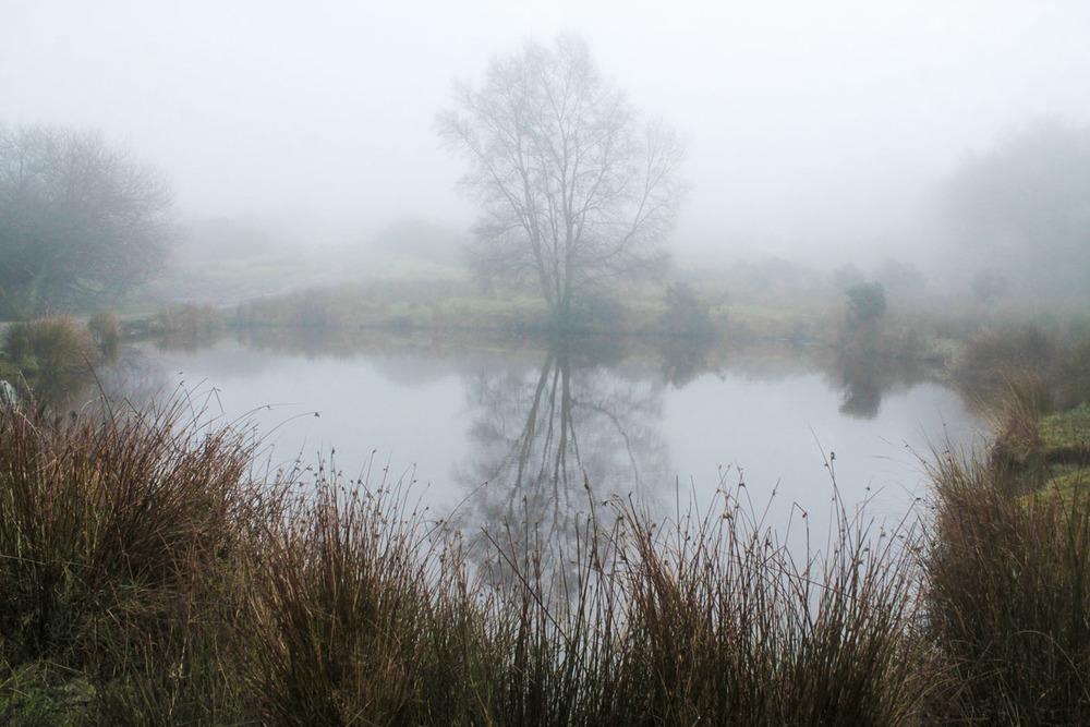 Fog on the Ashdown Forest  (Niebla en el Bosque de Ashdown),  Henry Hemen  2013,  CC-BY
