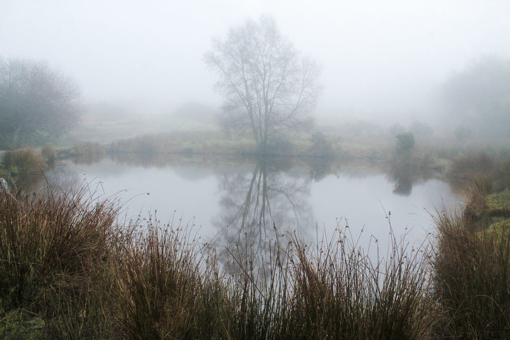 Fog on the Ashdown Forest, Henry Hemen 2013, CC-BY