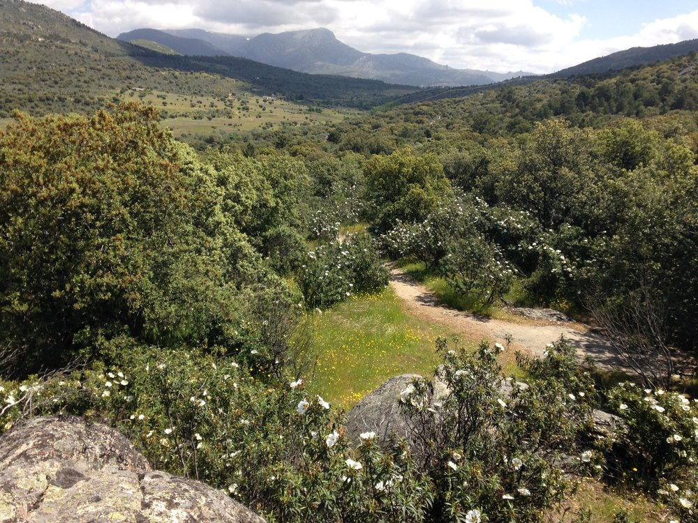 La Sierra de Guadarrama, hábitat del Grupo de juego en la naturaleza El Saltamontes.