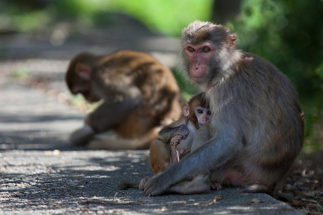 Monkey Mountain , por Jens Schott Knudsen, CC BY-NC 2.0 .