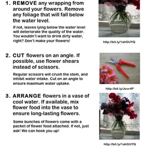 Flower Care.jpg