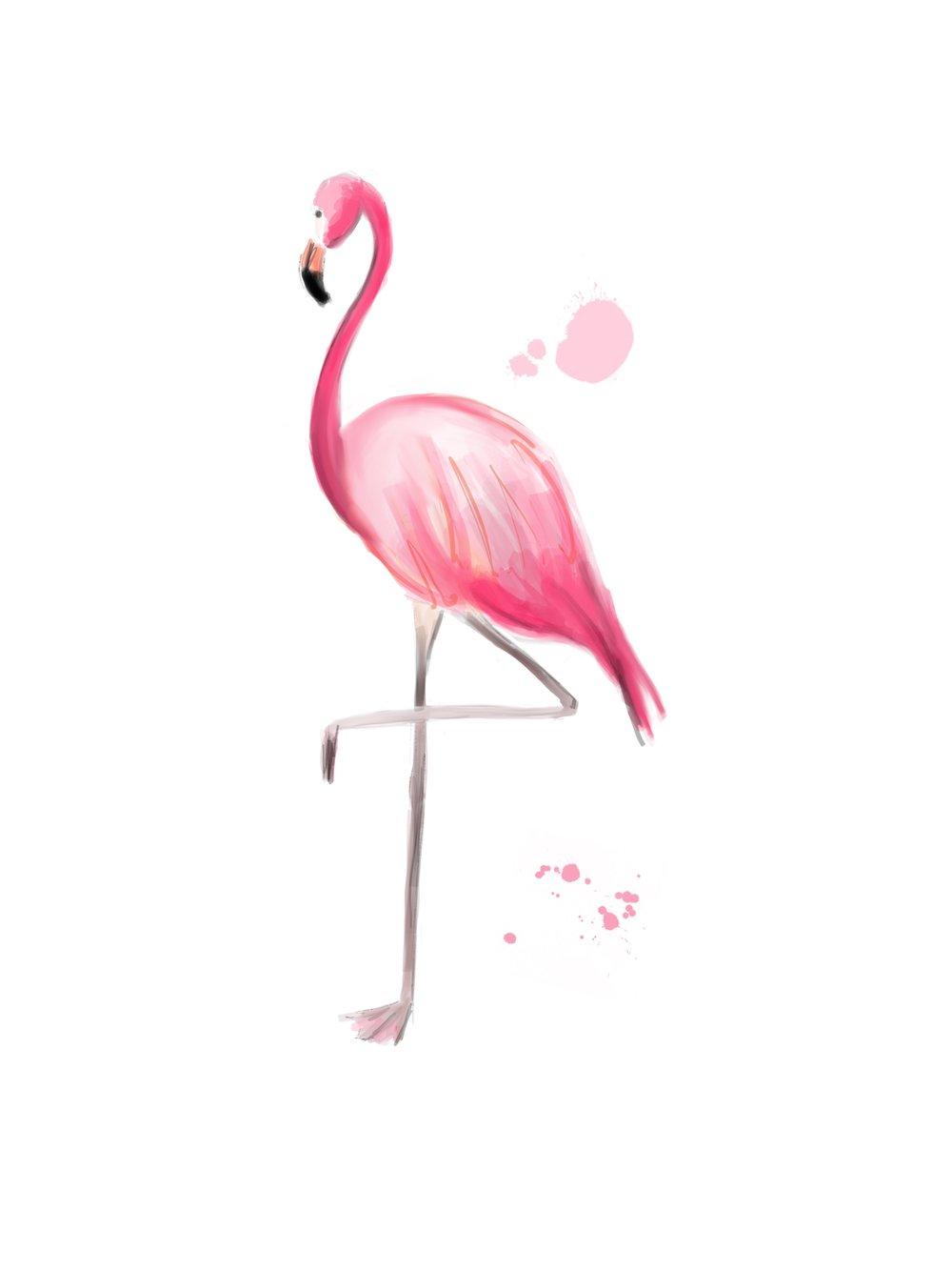 Flamingo01.jpg