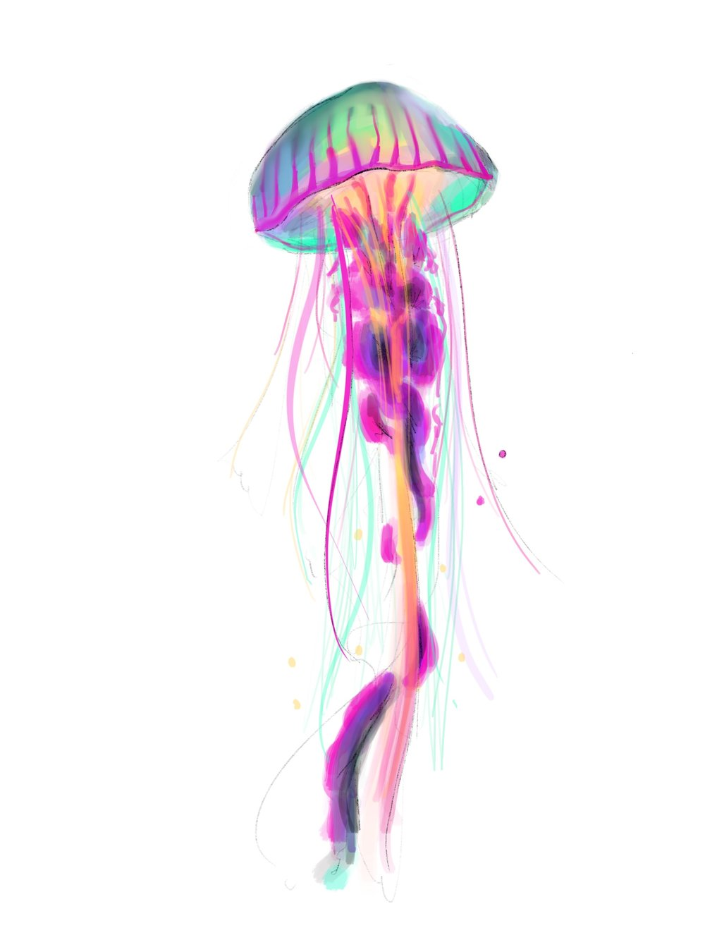 Jellyfish02.jpg