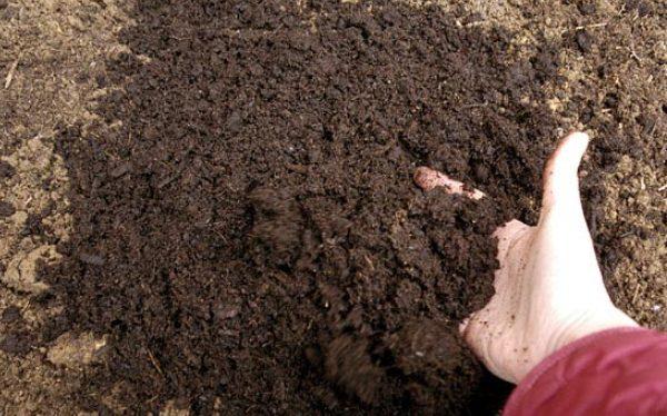 Healthy-soil.jpg